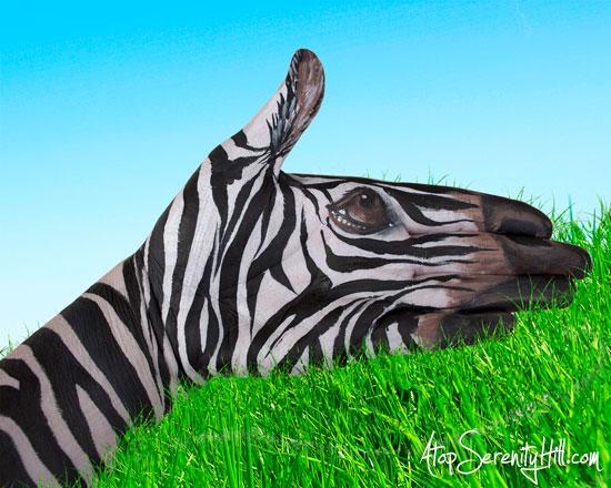 zebrapaintedonhand
