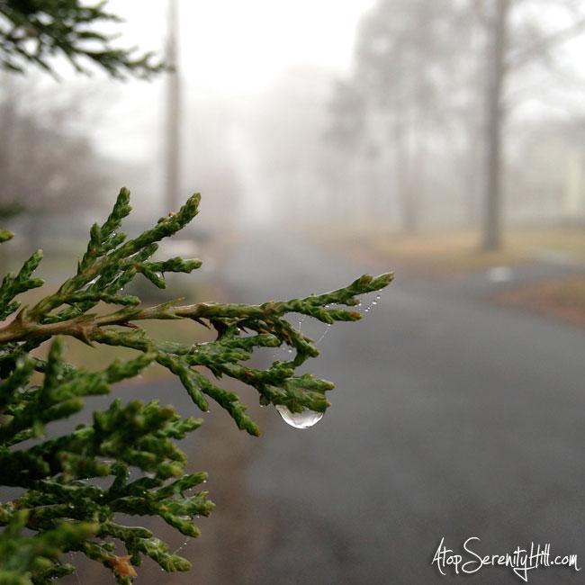 RainDropFoggyDay