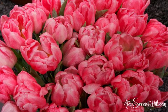 A peek inside the Philadelphia Flower Show • AtopSerenityHill.com #photography #tulips