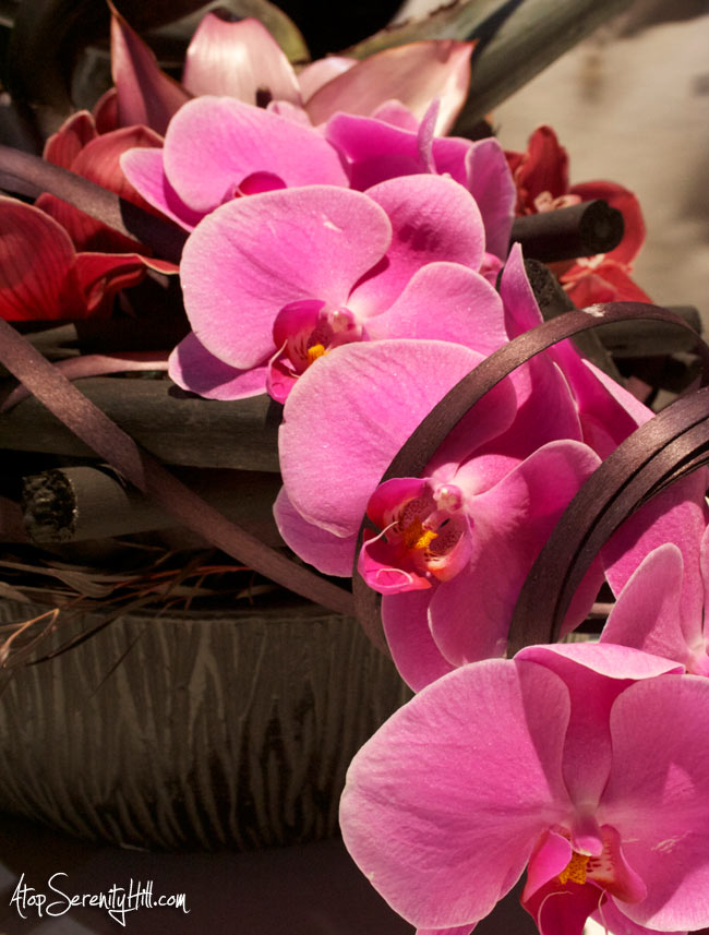 A peek inside the Philadelphia Flower Show • AtopSerenityHill.com #photography #orchids