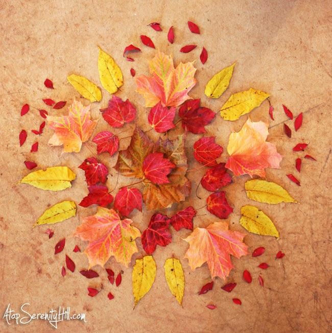 Fall leaves mandala using real leaves I collected on my walks! • AtopSerenityHill.com #photography #fall #mandala