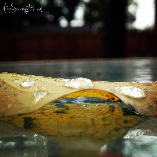 raindropphoto