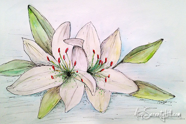 Easter lilies painted with watercolor and sketched in with a Micron pen • AtopSerenityHill.com #watercolor #easter #flowers