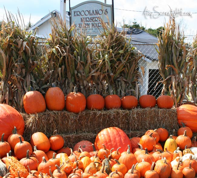 Fall visit to garden center: fall color photography • AtopSerenityHill.com #fallcolor #photography #pumpkins