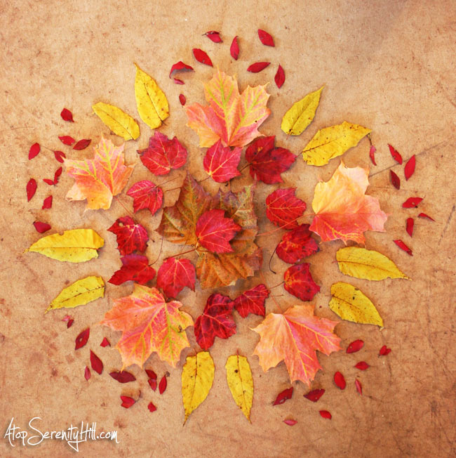 Fall leaves mandala using real leaves I collected on my walks! • AtopSerenityHill.com #photography #fall #mandala